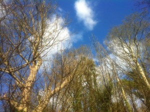 Sky & woods